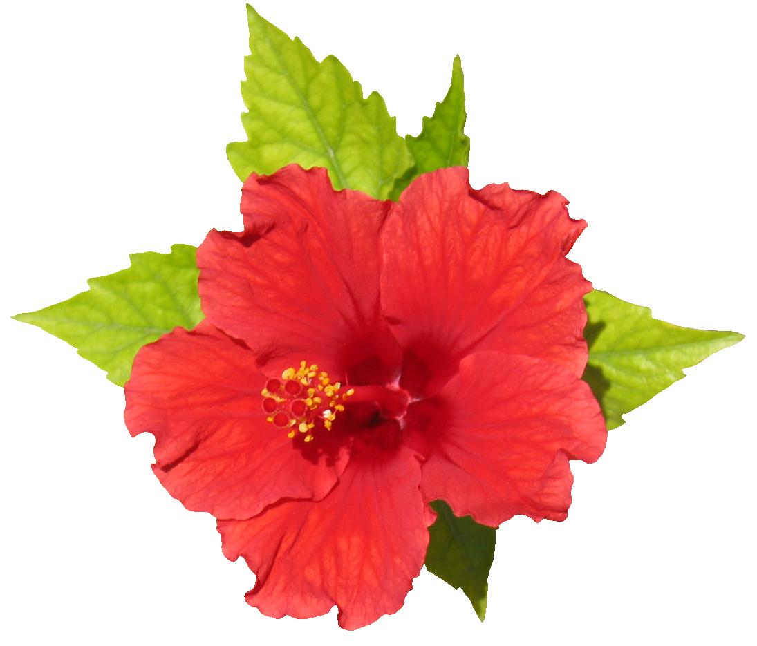 Outstanding Flower Render 1095 x 935 · 669 kB · png